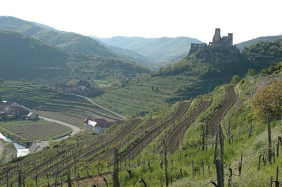 Vineyards in Austria - IMAGE VIA