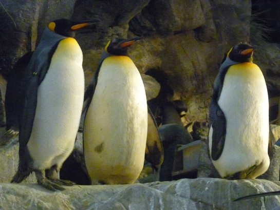 These guys LOVE Jammin' at the Zoo. | Lauren Knowlton