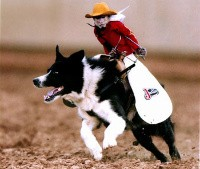 Whiplash the Cowboy Monkey left the glamorous world of food mascots to follow his real passion -- the rodeo. - IMAGE VIA