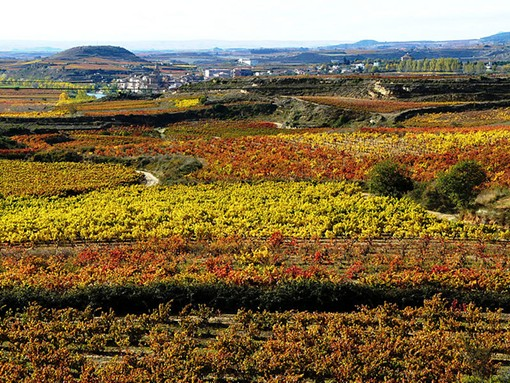 "A vineyard in the Rioja region of Spain - USER ""SHAURY,"" WIKIMEDIA COMMONS"