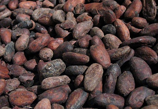 Roasted cacao - UMA SMITH, WIKIMEDIA COMMONS