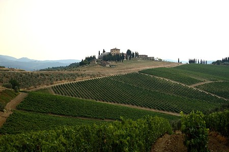 Vineyards in Tuscany, Italy - JOHN MENARD, WIKIMEDIA COMMONS