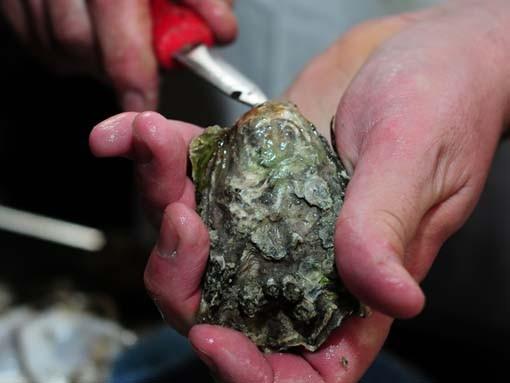 Oysters11affton_homestead.jpg