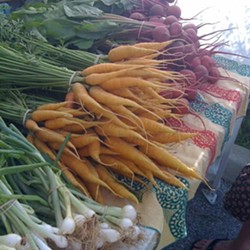 Early Spring Carrots at Maplewood Farmers' Market - HOLLY FANN