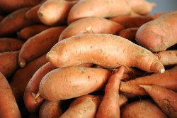 The Sweet Potato Project turns taters to tender.