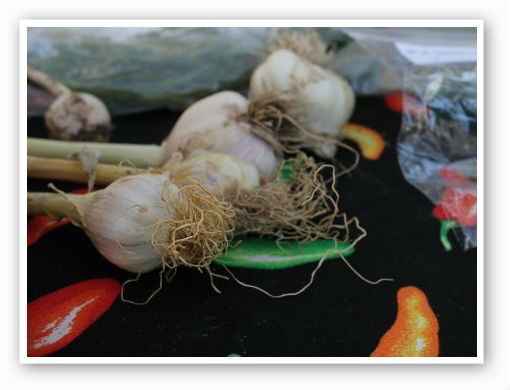 Garlic from 13th Street Garden | Pat Kohm