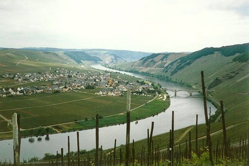 """A vineyard growing Mosel riesling - USER """"SIEGO,"""" WIKIMEDIA COMMONS"""