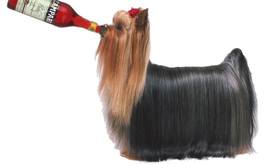 hair_of_dog.jpg