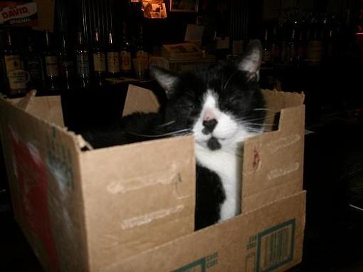 Bootz the Cat in Schrodinger's Box. - ROBIN WHEELER