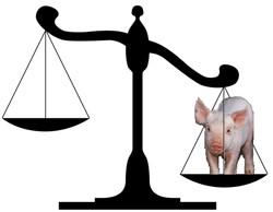 PiggyScale.jpg