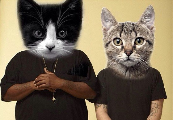 "Killer Mike, El-P, ""and a shitload of cats."""