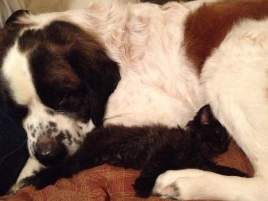 Walter the Dog: Kitten daddy.
