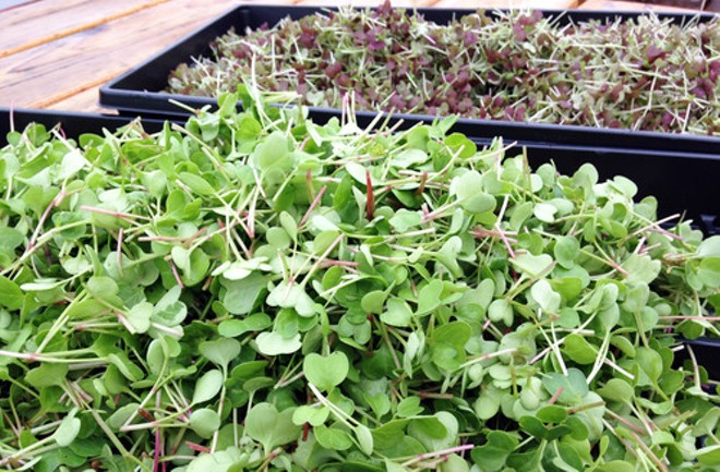 """FOOD ROOF's """"spicy"""" microgreens blend"""
