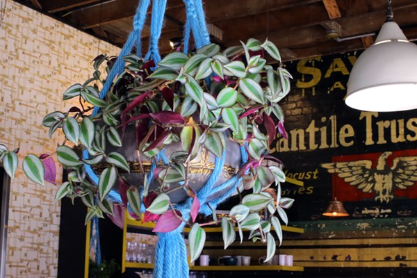 Macrame plant hangers add a homey touch. - CHELSEA NEULING
