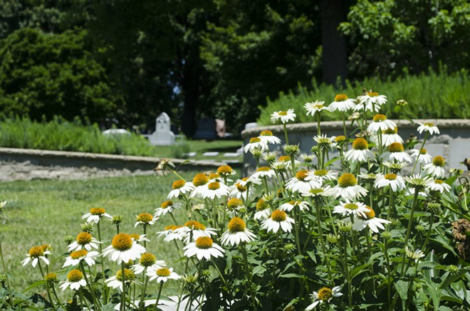 The new Wildwood Valley Gardens brings a botanical garden-style appeal to Bellefontaine Cemetery. - KAVAHN MANSOURI