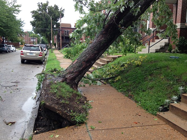Just off Tower Grove Park a tree fell into Magnolia Avenue. - PHOTO BY DOYLE MURPHY