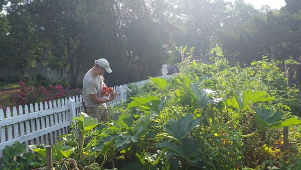 Tower Grove Park's kitchen garden is behind the park's greenhouse. - PHOTO COURTESY OF TOWER GROVE PARK