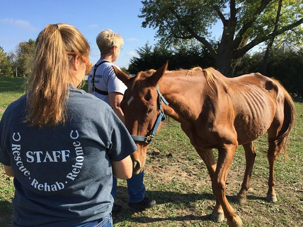 Staff members are shown with one of the emaciated horses. - PHOTO COURTESY OF THE HUMANE SOCIETY OF MISSOURI