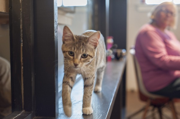 Mauhaus Cat Cafe Is Bringing Joy And Cats To Maplewood