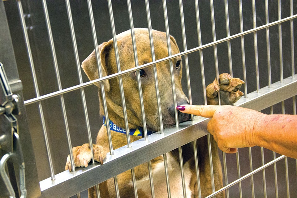 After years of instability, St.Louis County's animal shelter is at a crossroads. - DANNY WICENTOWSKI