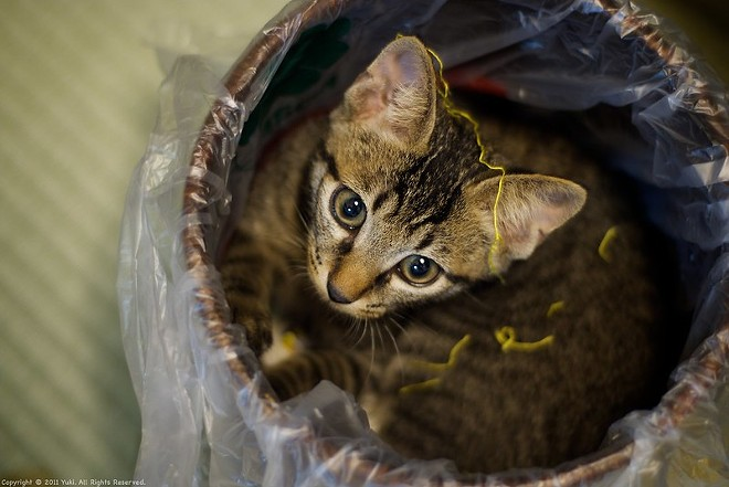 Just to be clear, we do love real cats. - FLICKR/ BORDER.GARAKU