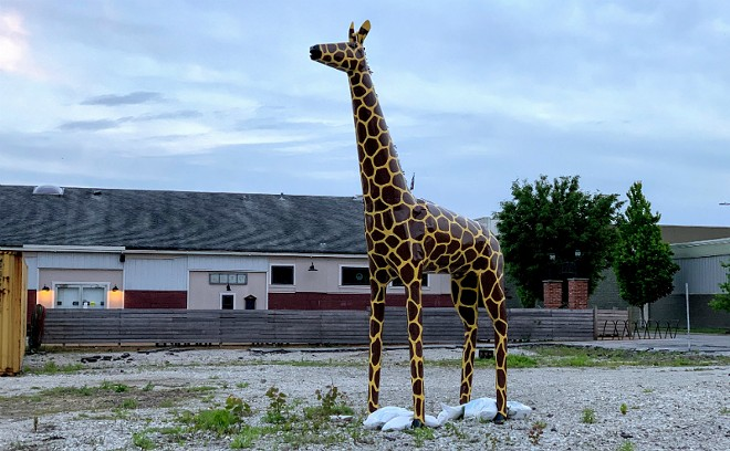 Peaches the giraffe, before the kidnapping. - DOYLE MURPHY