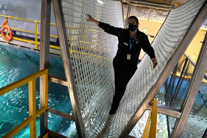 A new rope bridge stretches across Shark Canyon at the St. Louis Aquarium. - COURTESY ST. LOUIS AQUARIUM