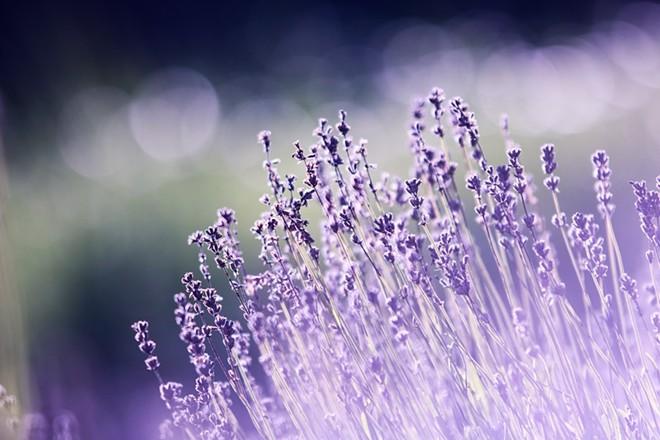 aromatherapy-terpenes-beautiful-blooming-blur.jpg
