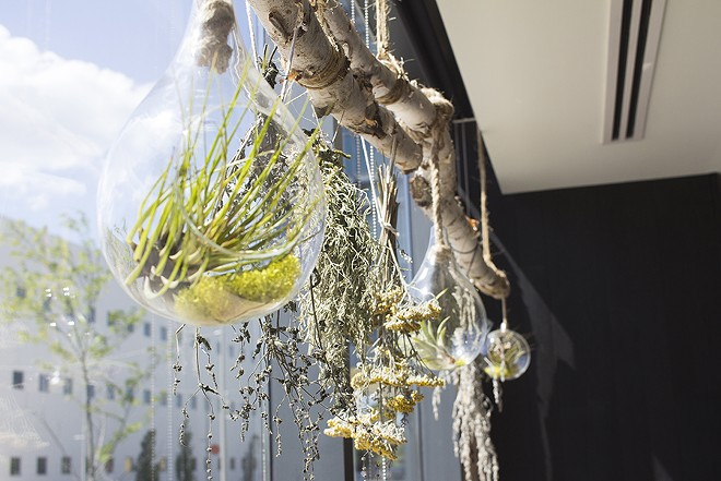 Hanging plants adorn the front-facing window, foreshadowing Vicia's fascination with plants. - MABEL SUEN