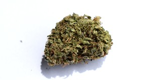 Dispensary Review: Tommy Chims Smokes Proper Cannabis' Weed