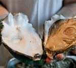 Schlafly's Stout and Oyster Fest