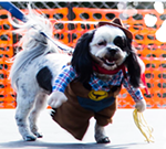 Canine Carnival & Fast and Furriest 5k