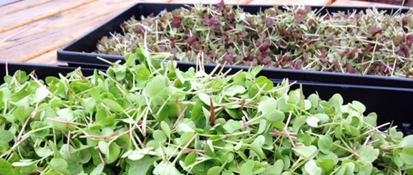 Downtown's Food Roof Is Growing Produce for Restaurants Across St. Louis