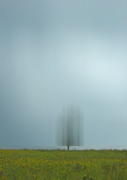 Proximity - Shaw Nature Reserve, Gray Summit. - ELLEN JANTZEN
