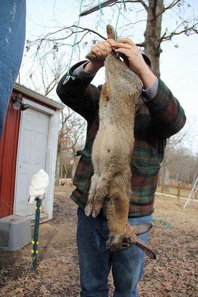"In the writer's ""Ax to Table"" series, he participated in the slaughter of this rabbit. - PHOTO BY THOMAS CRONE"