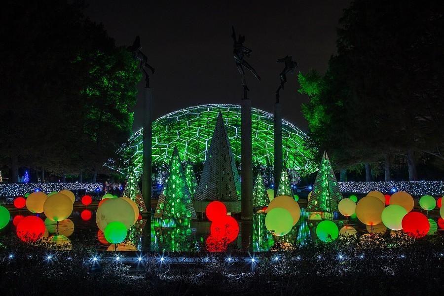Garden Glow returns to make evenings merry and bright. - MARY LOU OLSON/MISSOURI BOTANICAL GARDEN