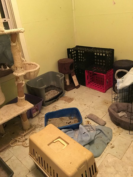 A room in the home of KKK leader Frank Ancona is filled with litter boxes. - IMAGE VIA MIDWEST COMMUNITY CAT ALLIANCE