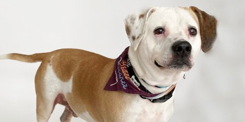 Copper, one of the adoptable dogs at the APA of Missouri, will be getting some new friends at the adoption center.