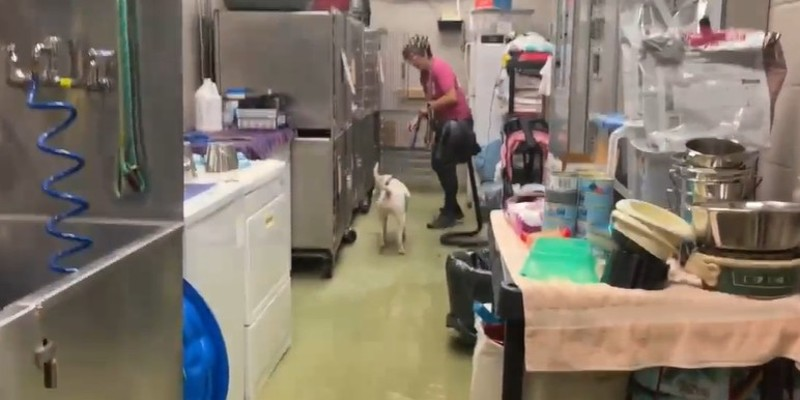 Stray Rescue of St. Louis' Shelter Floods, Needs Help Today
