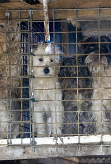 Newton County puppy mill in 2009. More photos below.