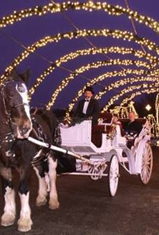 A horse and carriage during Winter Wonderland.