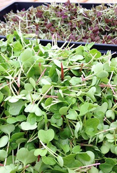 "FOOD ROOF's ""spicy"" microgreens blend"