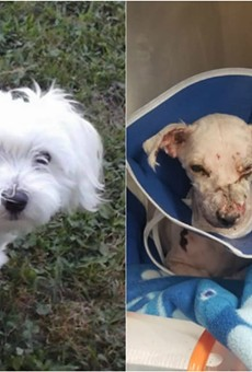 Charlie, before and after he endured chemical burns last week.