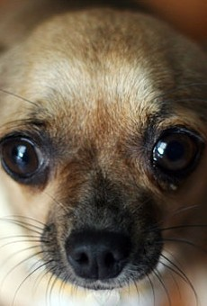 Tips to Keep Your Pet Safe This Fourth of July Weekend