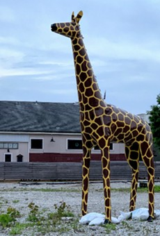 Give this giraffe back, you weasels.
