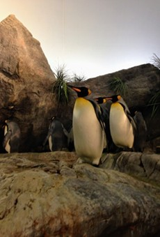 Penguin and Puffin Coast.