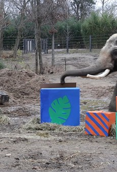 Raja the Elephant Just Had His 28th Birthday and, Yes, You're Old Now