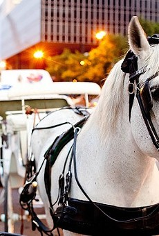 For the last six months, horse carriages in St. Louis city and county have operated regulation-free.
