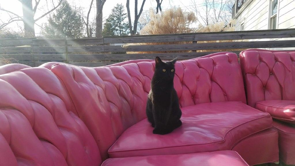 Luna the cat guards Sarah Rodhouse's latest furniture purchase — a 1950s bubblegum pink sofa. - COURTESY OF SARAH RODHOUSE
