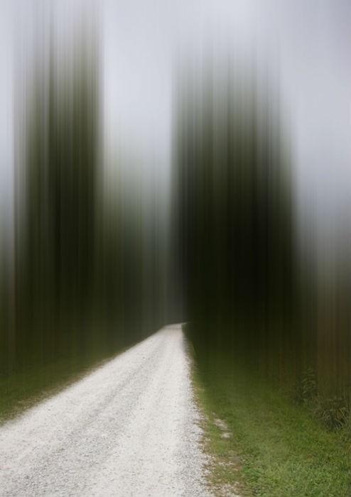 Leading Home - Shaw Nature Reserve, Gray Summit - ELLEN JANTZEN